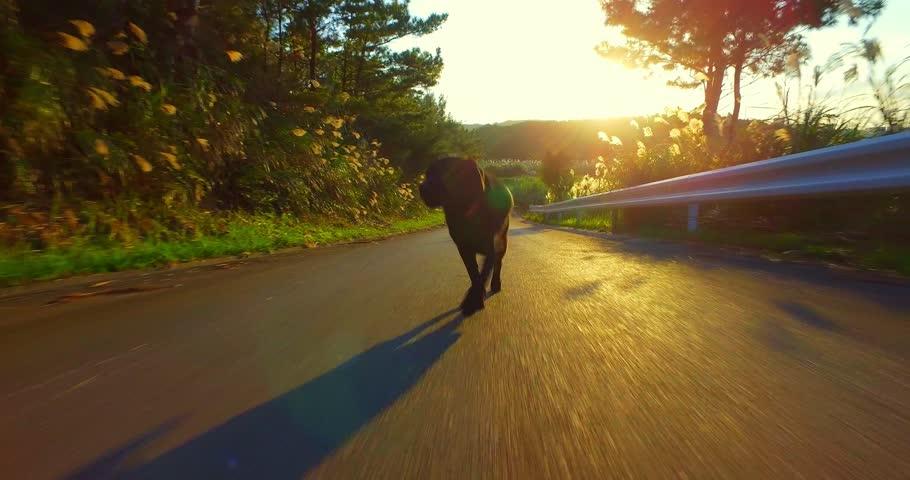 Heiðar keyrði á svartan hund í Kópavoginum -