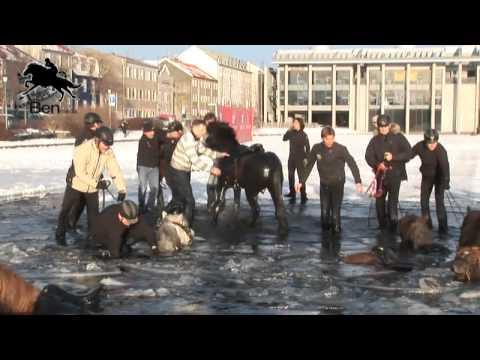 Þegar hestarnir féllu í gegnum ísinn á Reykjavíkurtjörn - Myndband