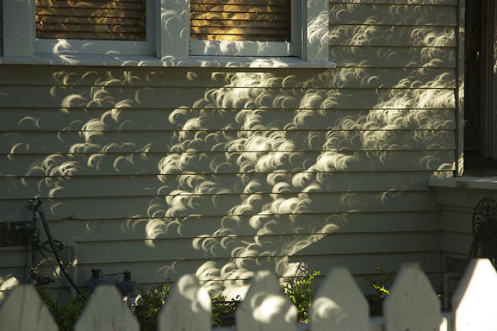 Shadows Of Leaves From A Tree During A Solar Eclipse