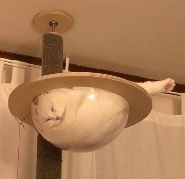 Glass Bowl Of Cat!