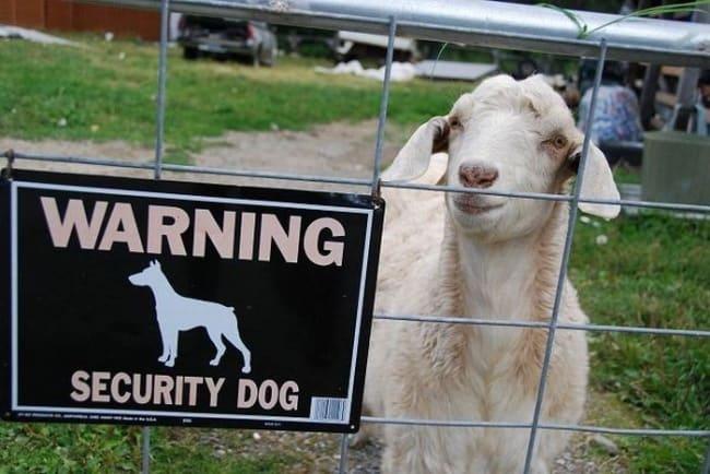Security Fails dog