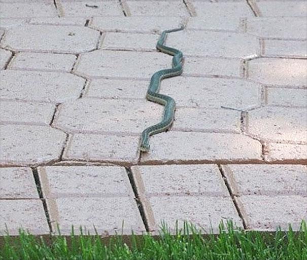 Tidy Snake