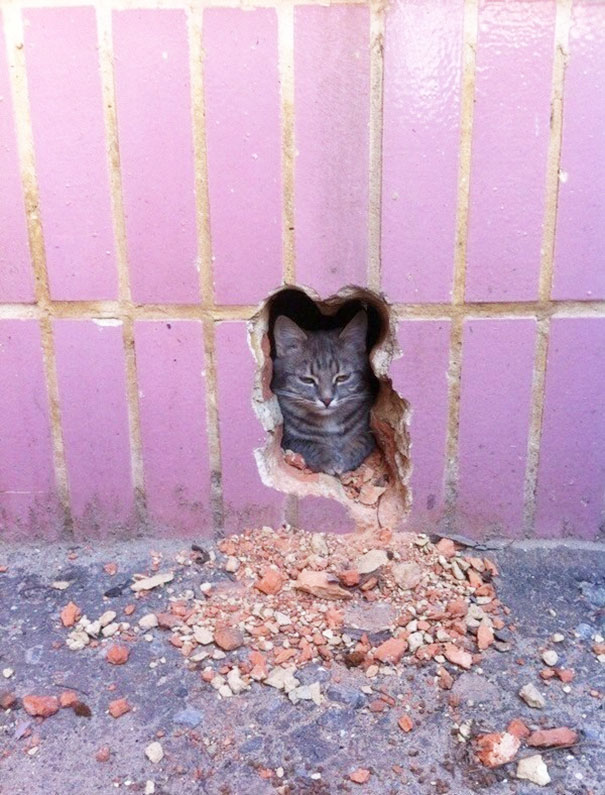 The Pawshank Redemption