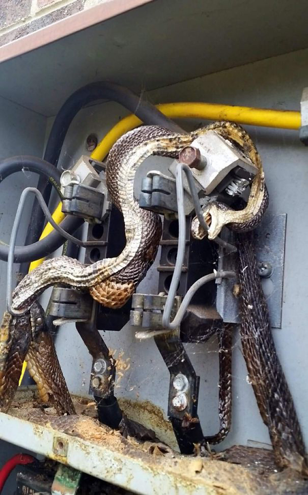 snakes electrocuted scariest creatures
