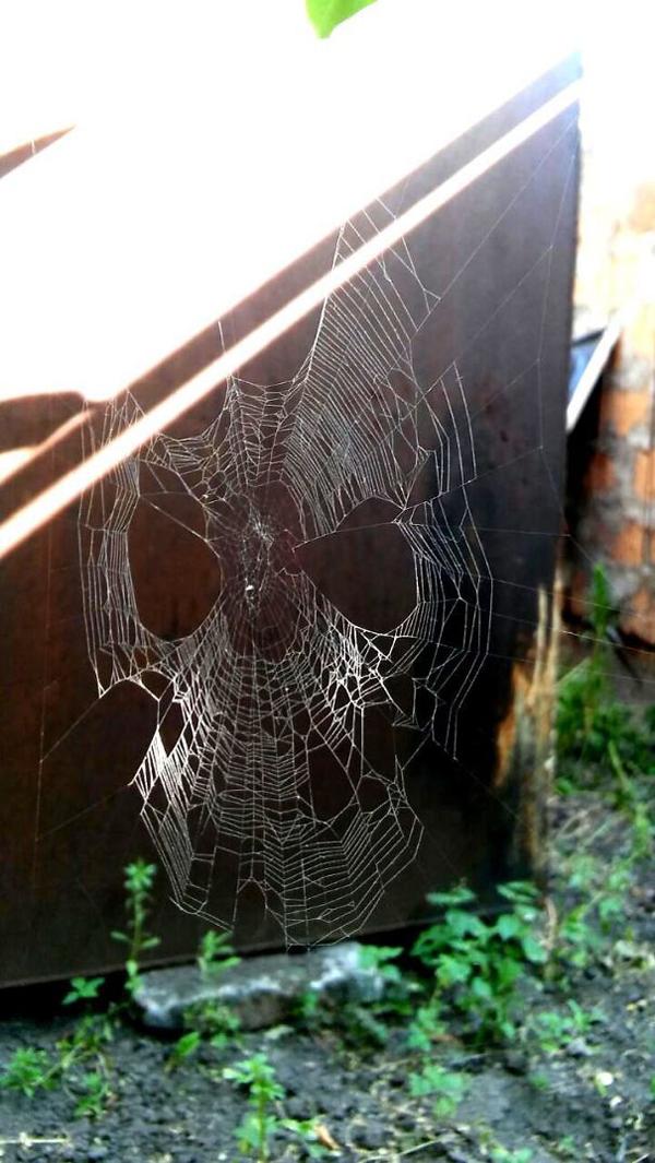 spider web spiderman mask