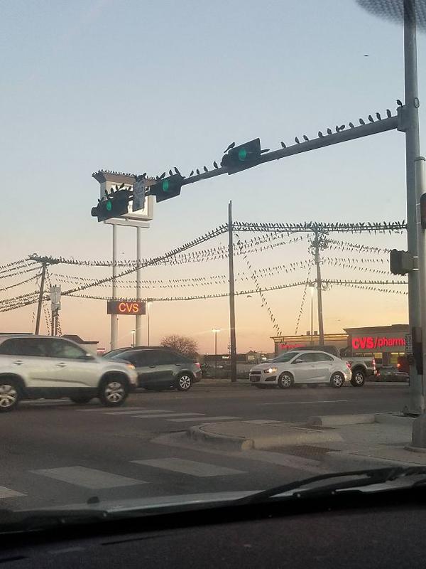 texas bird invasion scariest creatures