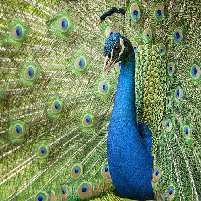 Animals-Photography-Dick-Van-Dujin